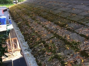 AquaSeal does moss removal and roof cleaning services. We are fast and affordable.
