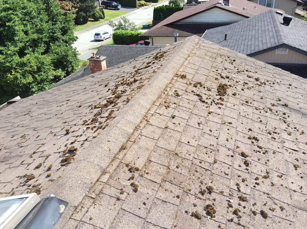 Langley Roof Cleaning | Moss Removal, before image. We cleaned this mossy roof in no time.