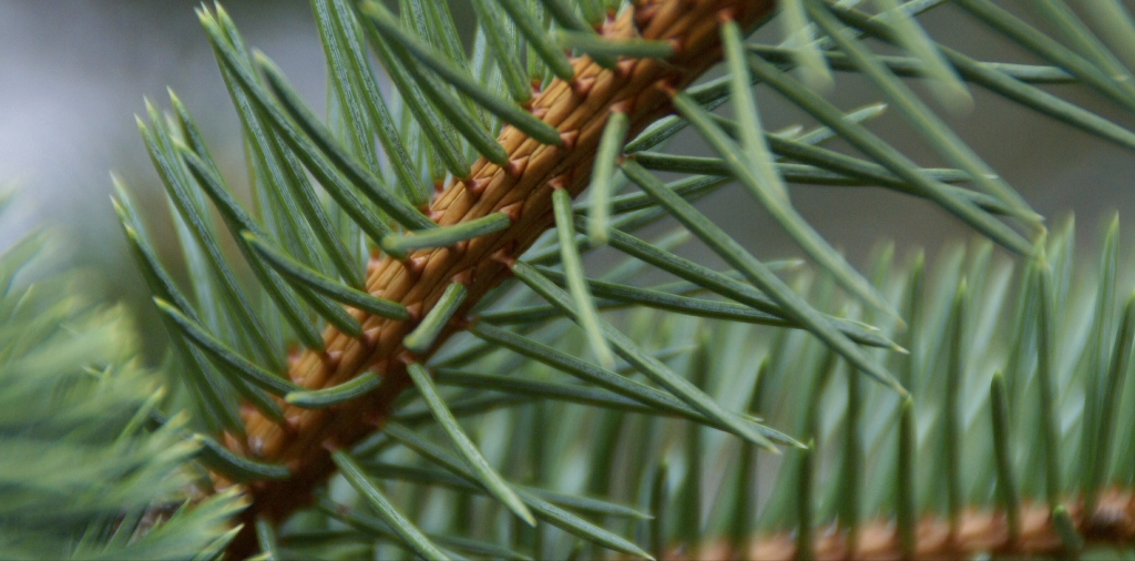 How to Protect Gutters from Pine Needles