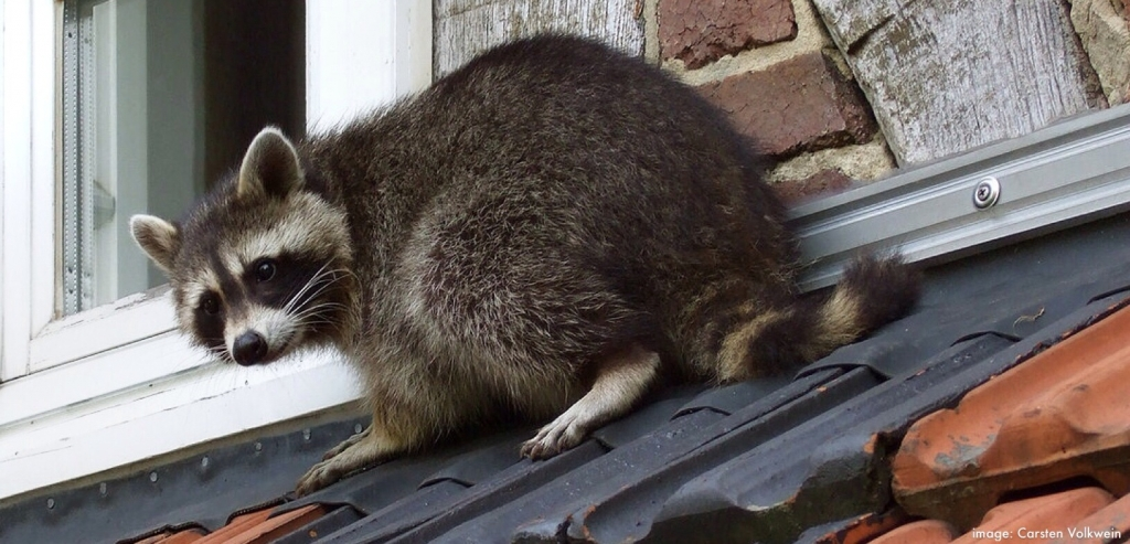 How to Keep Rodents Out of Gutters