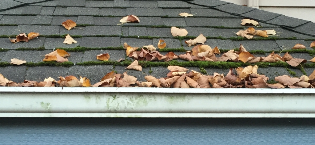 How to Stop Moss from Forming in Gutters